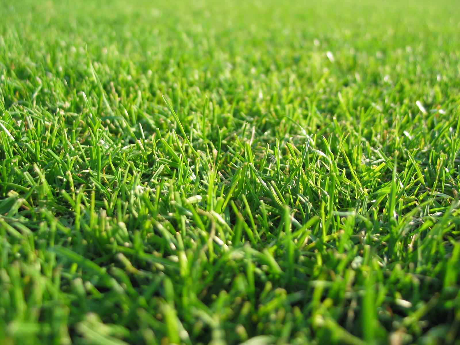 varie_Grass