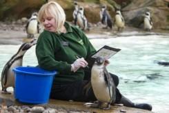 Varie_London Zoo