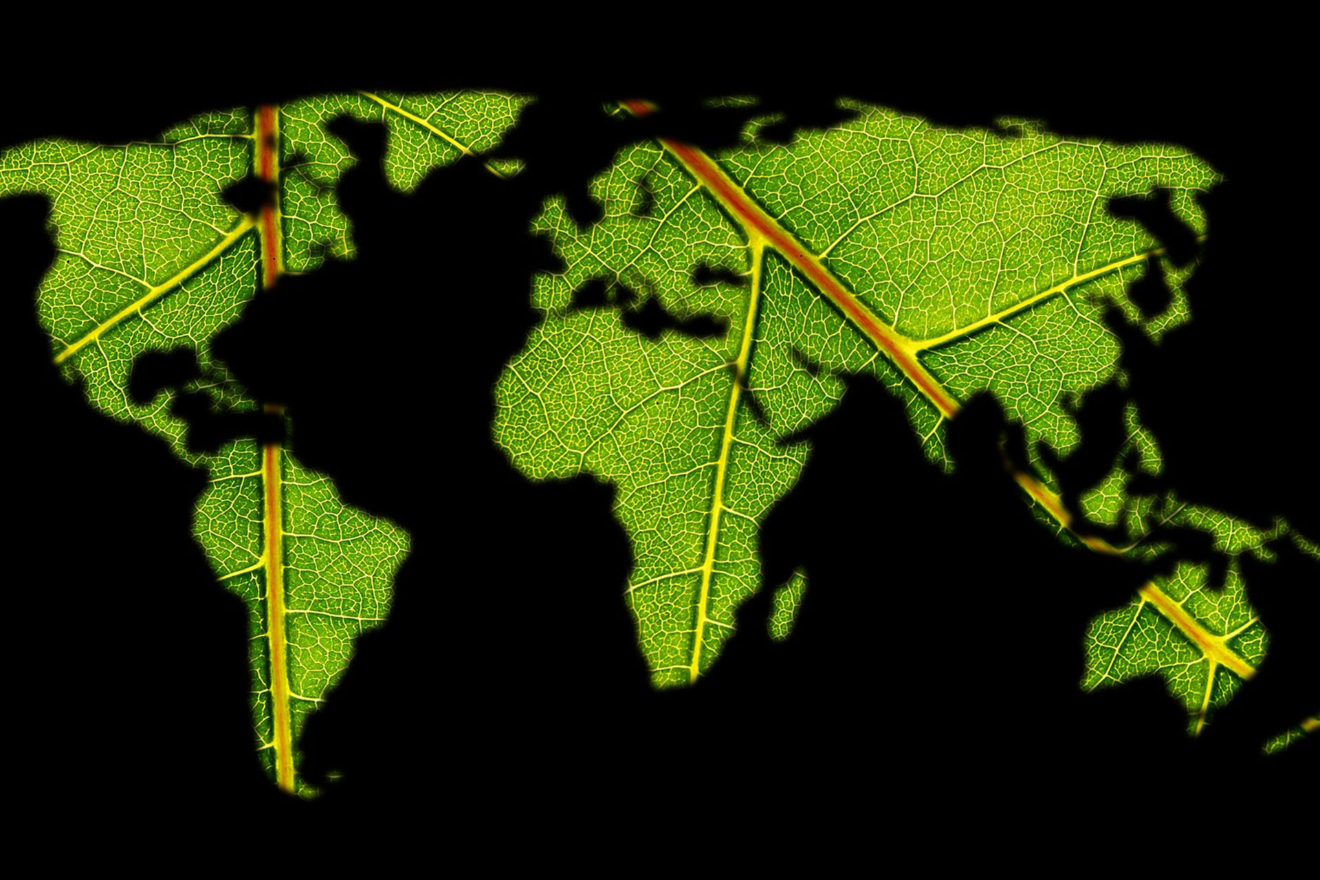 I casi Coop e Apot come Unilever e P&G verso una filiera produttiva e distributiva sostenibile